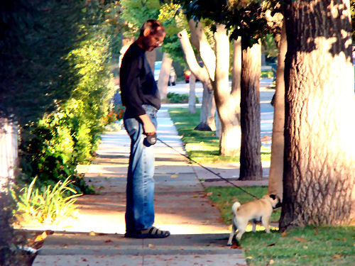 steve-jobs-walking-his-pug